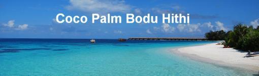 Coco Palm - Menu